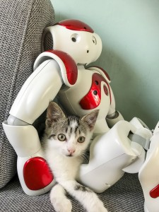Nao robot and cat